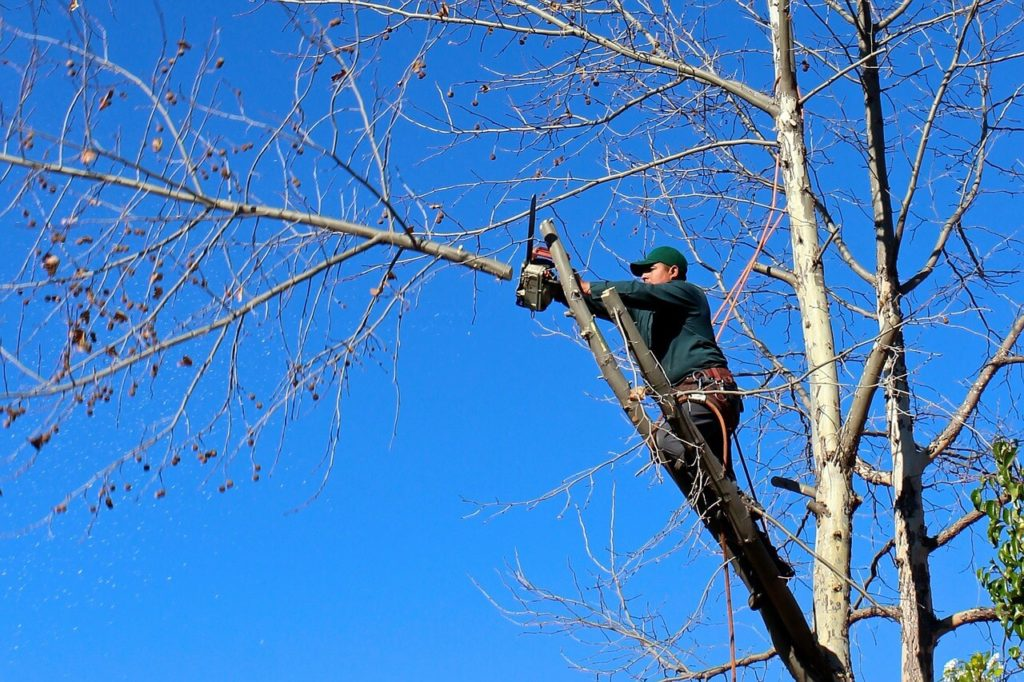 Contact Us-Poway CA Tree Trimming and Stump Grinding Services-We Offer Tree Trimming Services, Tree Removal, Tree Pruning, Tree Cutting, Residential and Commercial Tree Trimming Services, Storm Damage, Emergency Tree Removal, Land Clearing, Tree Companies, Tree Care Service, Stump Grinding, and we're the Best Tree Trimming Company Near You Guaranteed!