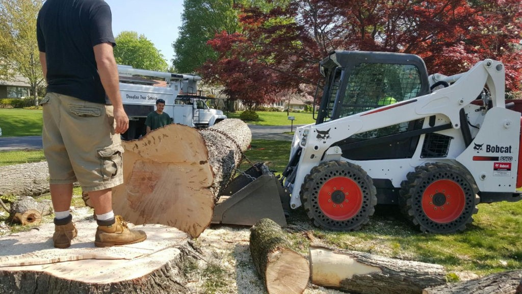 Escondido-Poway CA Tree Trimming and Stump Grinding Services-We Offer Tree Trimming Services, Tree Removal, Tree Pruning, Tree Cutting, Residential and Commercial Tree Trimming Services, Storm Damage, Emergency Tree Removal, Land Clearing, Tree Companies, Tree Care Service, Stump Grinding, and we're the Best Tree Trimming Company Near You Guaranteed!