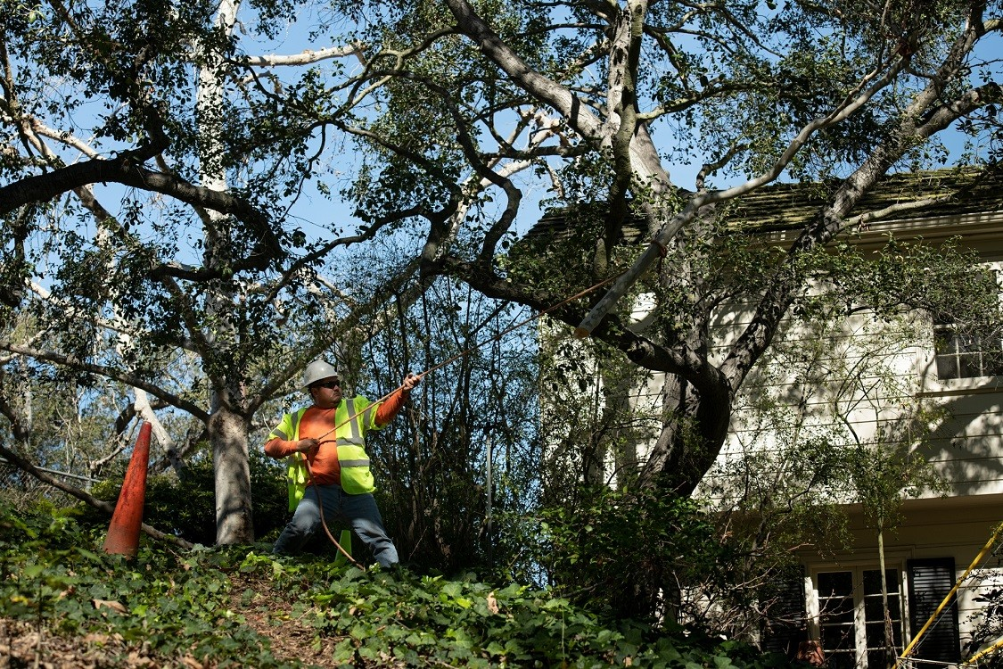 Eucalyptus Hills-Poway CA Tree Trimming and Stump Grinding Services-We Offer Tree Trimming Services, Tree Removal, Tree Pruning, Tree Cutting, Residential and Commercial Tree Trimming Services, Storm Damage, Emergency Tree Removal, Land Clearing, Tree Companies, Tree Care Service, Stump Grinding, and we're the Best Tree Trimming Company Near You Guaranteed!