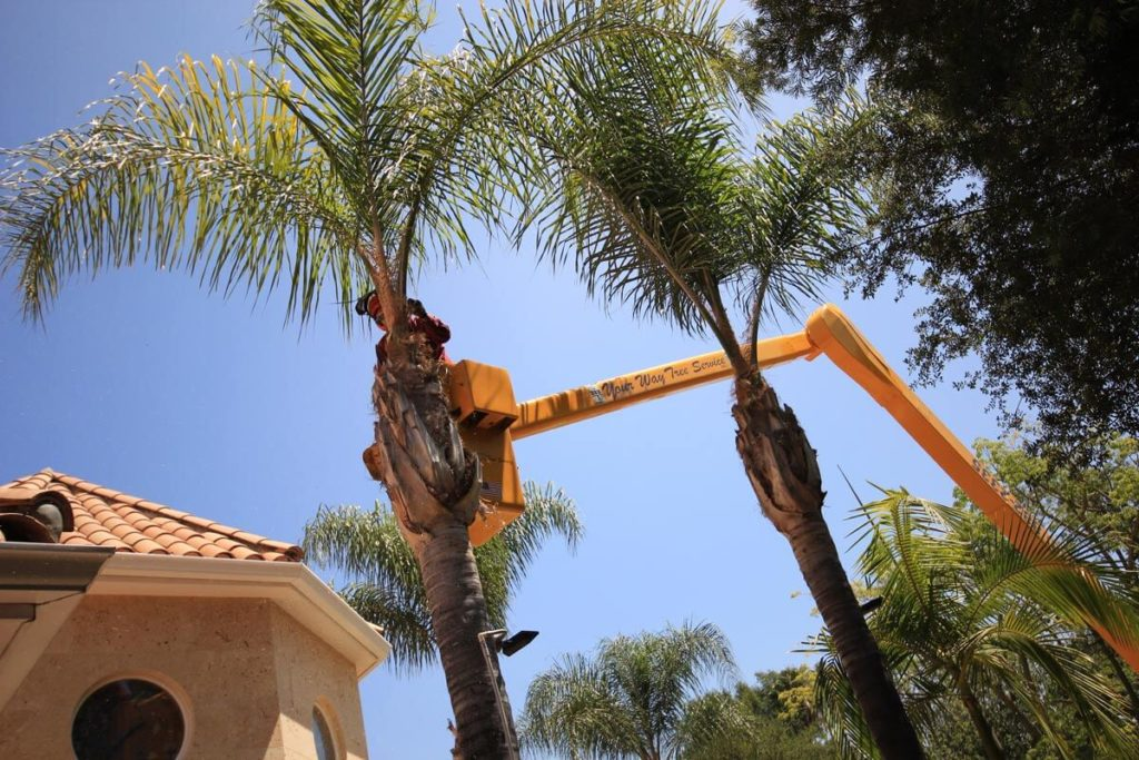 Palm Tree Trimming-Poway CA Tree Trimming and Stump Grinding Services-We Offer Tree Trimming Services, Tree Removal, Tree Pruning, Tree Cutting, Residential and Commercial Tree Trimming Services, Storm Damage, Emergency Tree Removal, Land Clearing, Tree Companies, Tree Care Service, Stump Grinding, and we're the Best Tree Trimming Company Near You Guaranteed!