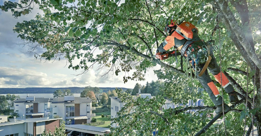 Poway CA Tree Trimming and Stump Grinding Services Home Page Image-We Offer Tree Trimming Services, Tree Removal, Tree Pruning, Tree Cutting, Residential and Commercial Tree Trimming Services, Storm Damage, Emergency Tree Removal, Land Clearing, Tree Companies, Tree Care Service, Stump Grinding, and we're the Best Tree Trimming Company Near You Guaranteed!
