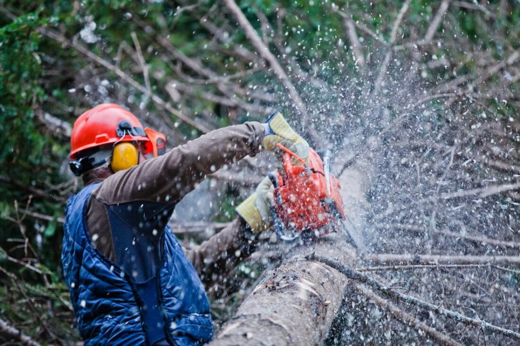 Ramona-Poway CA Tree Trimming and Stump Grinding Services-We Offer Tree Trimming Services, Tree Removal, Tree Pruning, Tree Cutting, Residential and Commercial Tree Trimming Services, Storm Damage, Emergency Tree Removal, Land Clearing, Tree Companies, Tree Care Service, Stump Grinding, and we're the Best Tree Trimming Company Near You Guaranteed!