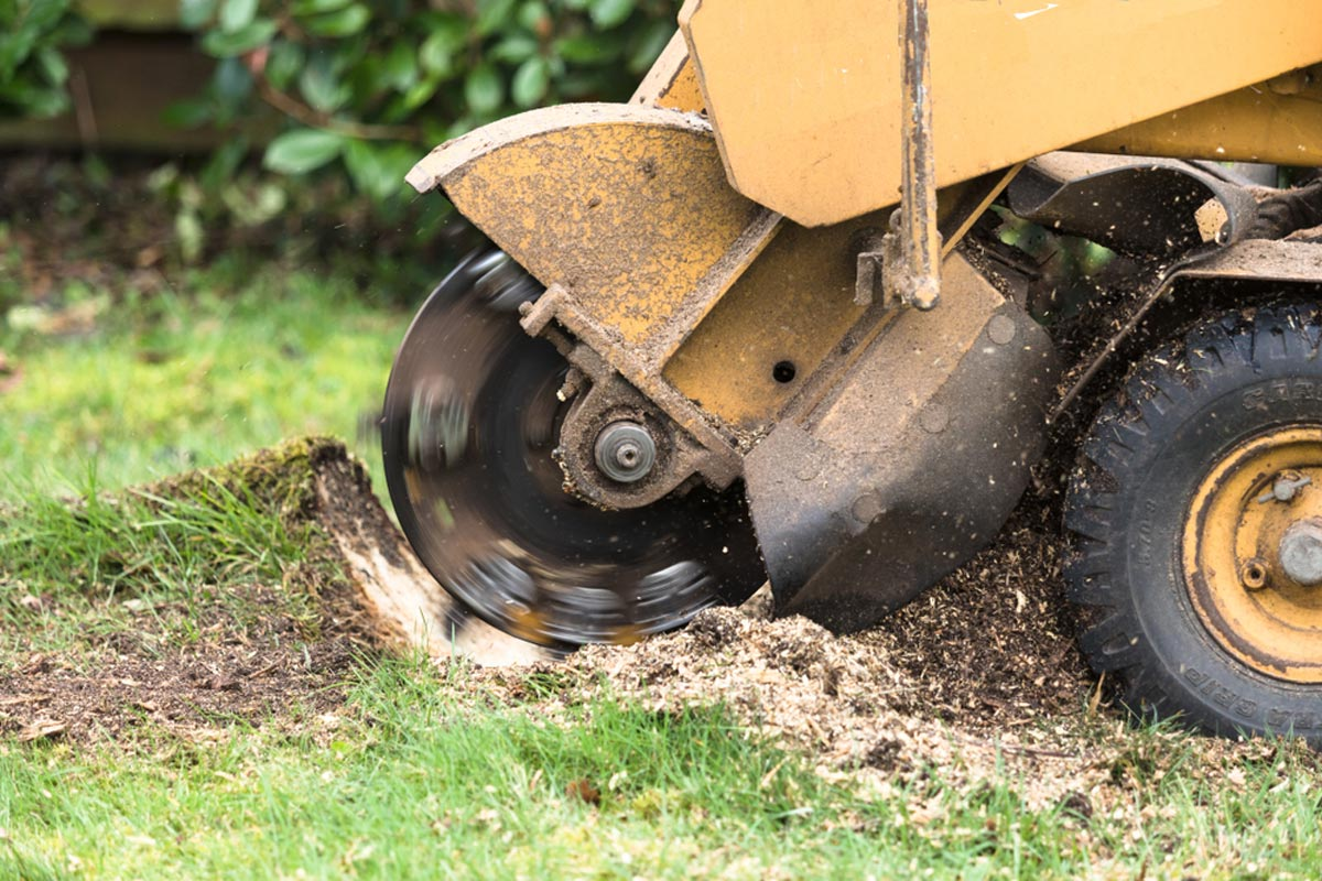 Stump Grinding-Poway CA Tree Trimming and Stump Grinding Services-We Offer Tree Trimming Services, Tree Removal, Tree Pruning, Tree Cutting, Residential and Commercial Tree Trimming Services, Storm Damage, Emergency Tree Removal, Land Clearing, Tree Companies, Tree Care Service, Stump Grinding, and we're the Best Tree Trimming Company Near You Guaranteed!