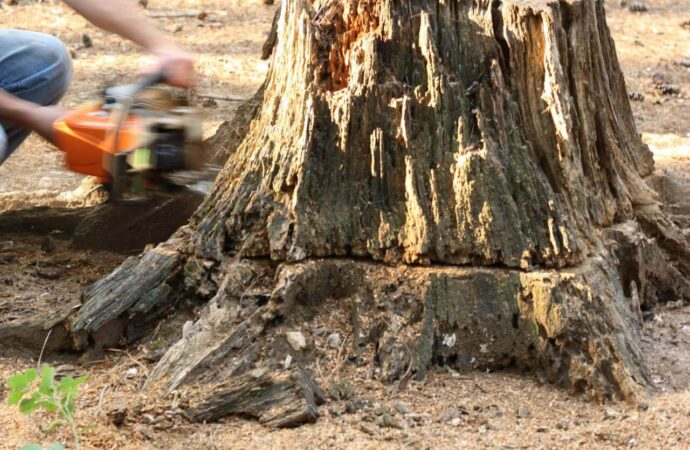 Stump Removal-Poway CA Tree Trimming and Stump Grinding Services-We Offer Tree Trimming Services, Tree Removal, Tree Pruning, Tree Cutting, Residential and Commercial Tree Trimming Services, Storm Damage, Emergency Tree Removal, Land Clearing, Tree Companies, Tree Care Service, Stump Grinding, and we're the Best Tree Trimming Company Near You Guaranteed!