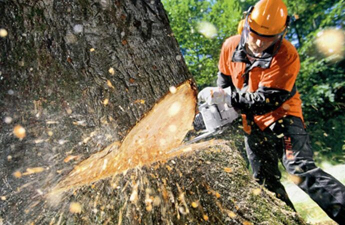 Tree Cutting-Poway CA Tree Trimming and Stump Grinding Services-We Offer Tree Trimming Services, Tree Removal, Tree Pruning, Tree Cutting, Residential and Commercial Tree Trimming Services, Storm Damage, Emergency Tree Removal, Land Clearing, Tree Companies, Tree Care Service, Stump Grinding, and we're the Best Tree Trimming Company Near You Guaranteed!