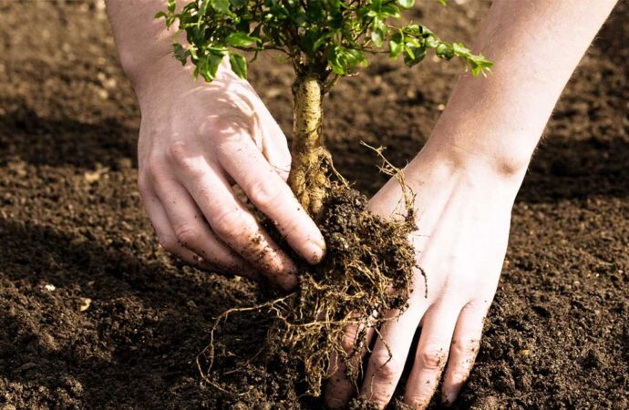 Tree Planting-Poway CA Tree Trimming and Stump Grinding Services-We Offer Tree Trimming Services, Tree Removal, Tree Pruning, Tree Cutting, Residential and Commercial Tree Trimming Services, Storm Damage, Emergency Tree Removal, Land Clearing, Tree Companies, Tree Care Service, Stump Grinding, and we're the Best Tree Trimming Company Near You Guaranteed!
