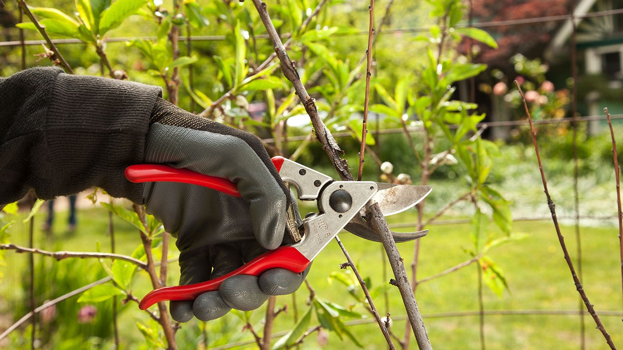 Tree Pruning-Poway CA Tree Trimming and Stump Grinding Services-We Offer Tree Trimming Services, Tree Removal, Tree Pruning, Tree Cutting, Residential and Commercial Tree Trimming Services, Storm Damage, Emergency Tree Removal, Land Clearing, Tree Companies, Tree Care Service, Stump Grinding, and we're the Best Tree Trimming Company Near You Guaranteed!